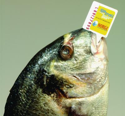 Arrow tag / fiskemerker / fiskeklips