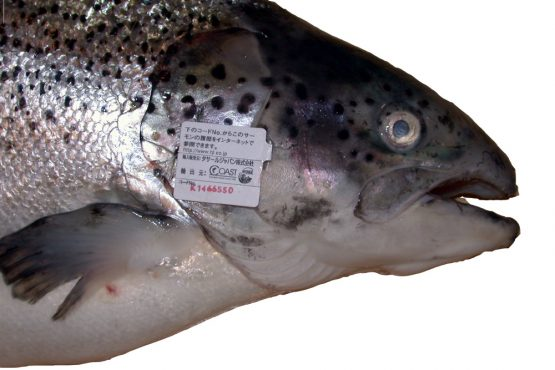 merking av fisk